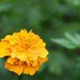 山の花たち
