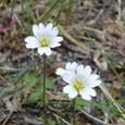 57  パタゴニアで見た花たち